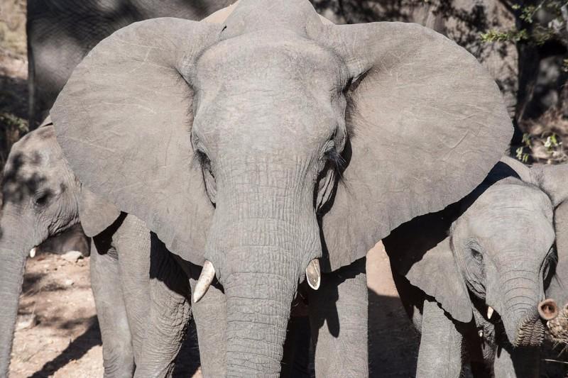 simbavati_river_lodge_elephant