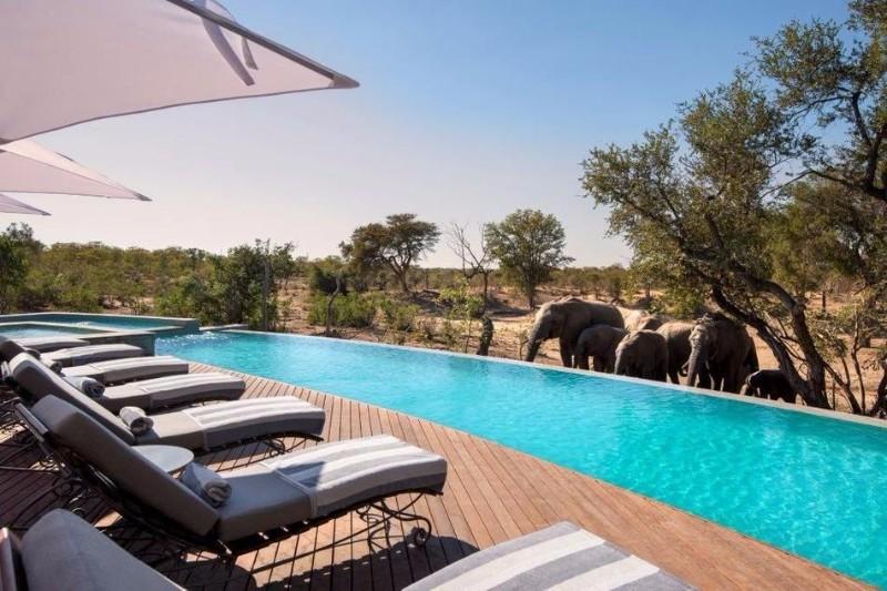 ngala-safari-lodge-swimming-pool-8.jpg.950x0