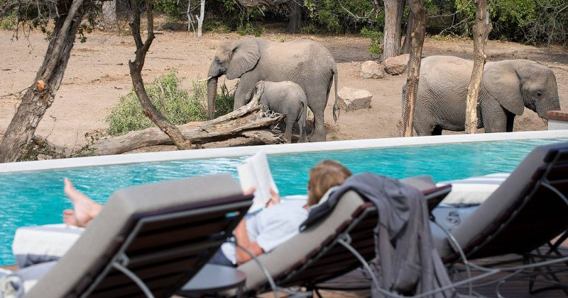 ngala-safari-lodge-swimming-pool