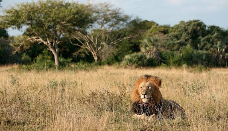 safari24.jpg.950x0