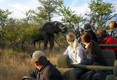 2-elephant-gamedrive