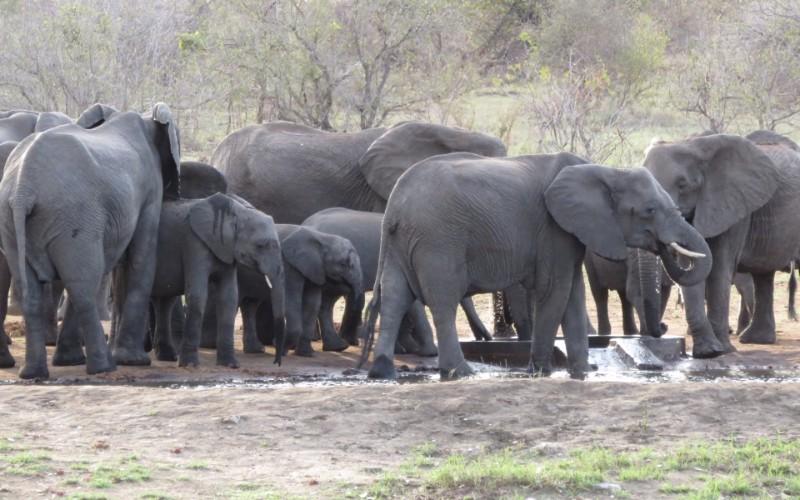 Senalala-elephants
