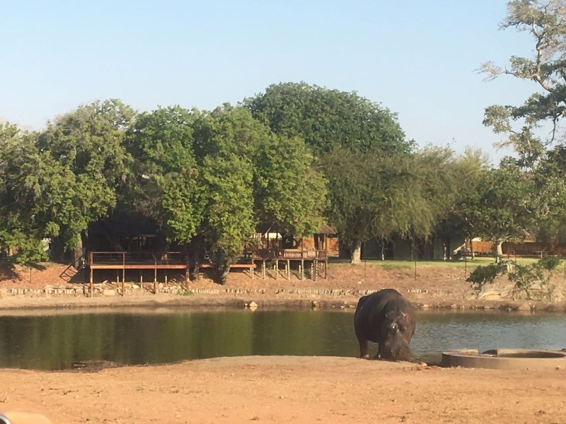 view-to-lodge-from-waterhole-with-hippo-outside