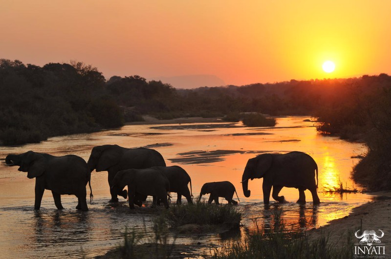 inyati-game-lodge-elephants-at-sunset