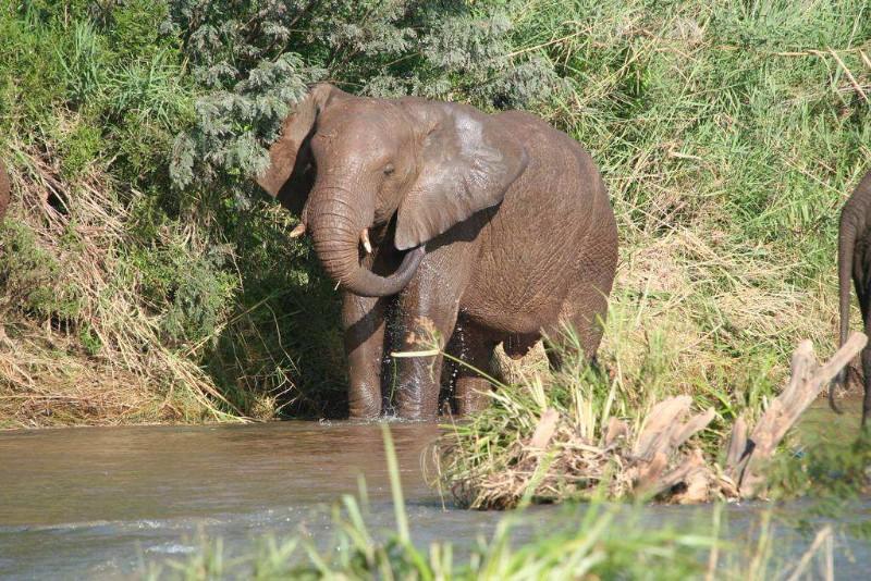 Chisomo-safari-camp-elephant-bathing