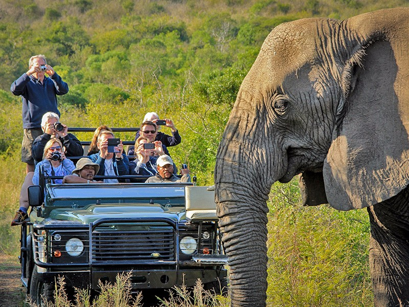 thula-Safari-M4