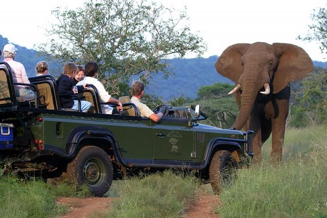 Zuid-Afrika_Mkuze_Falls_Lodge_game_drive