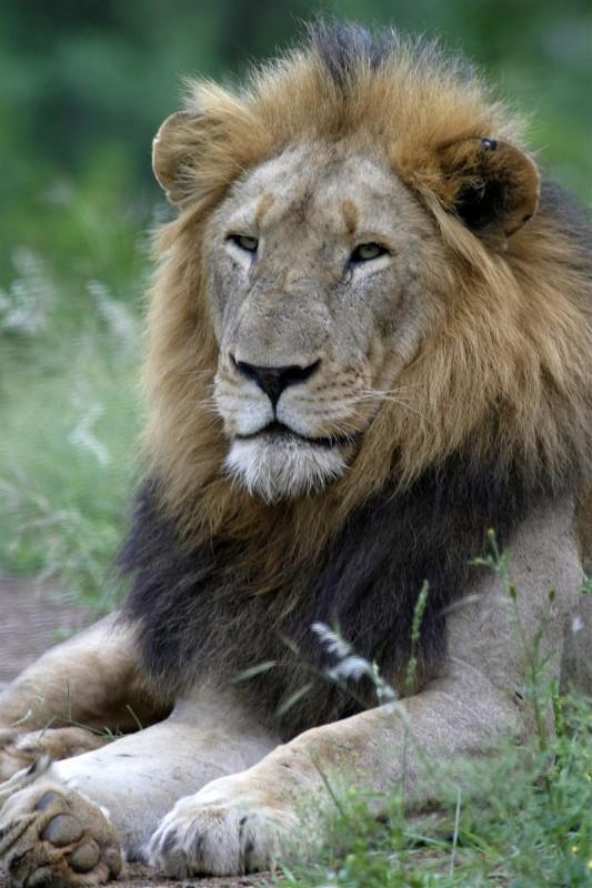 lion022
