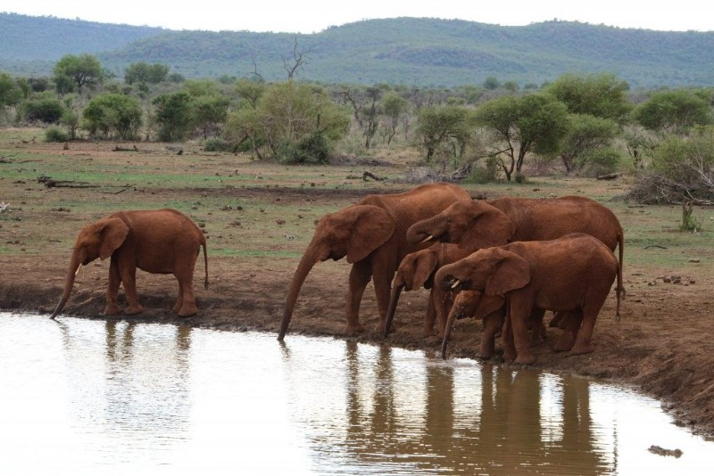 mhondoro-game-lodge-wildlife-elephant-sightings