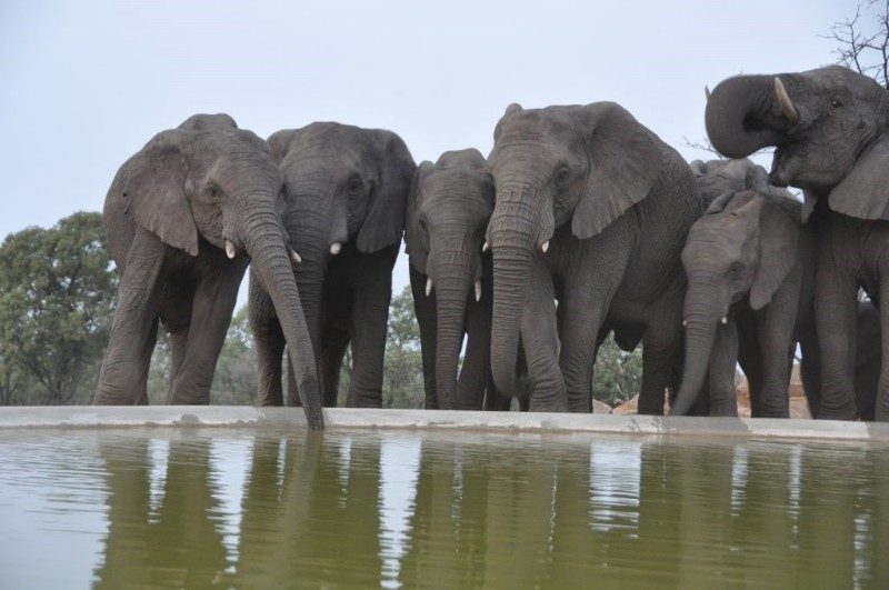 mhondoro-game-lodge-wildlife-elephants