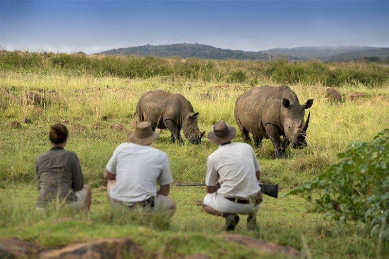 mhondoro-luxury-lodge-and-villa-game-viewing-on-foot-getting-close-to-rhino