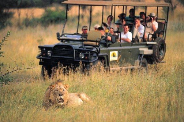 Entabeni-Lion-Sighting