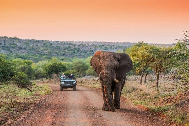 2-Elephant-at-Leopard-Mountain-Safari-Lodge-Manyoni-1