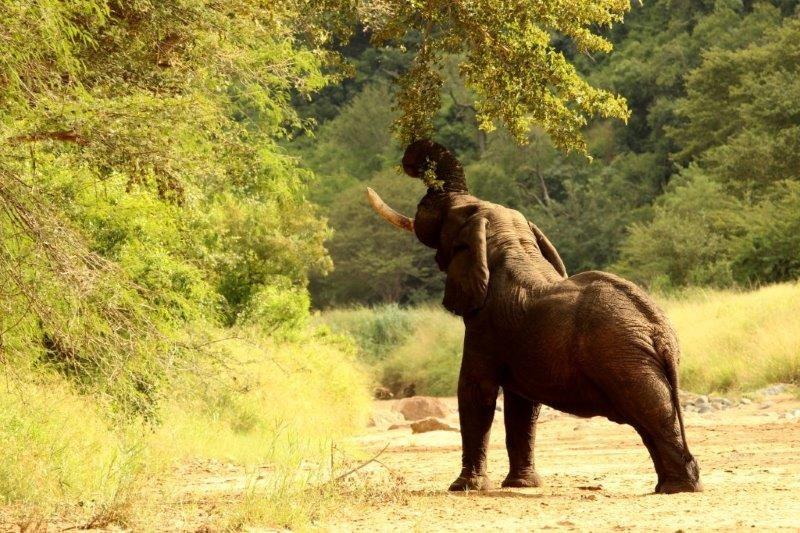 Elephants-16-08-14-6-1