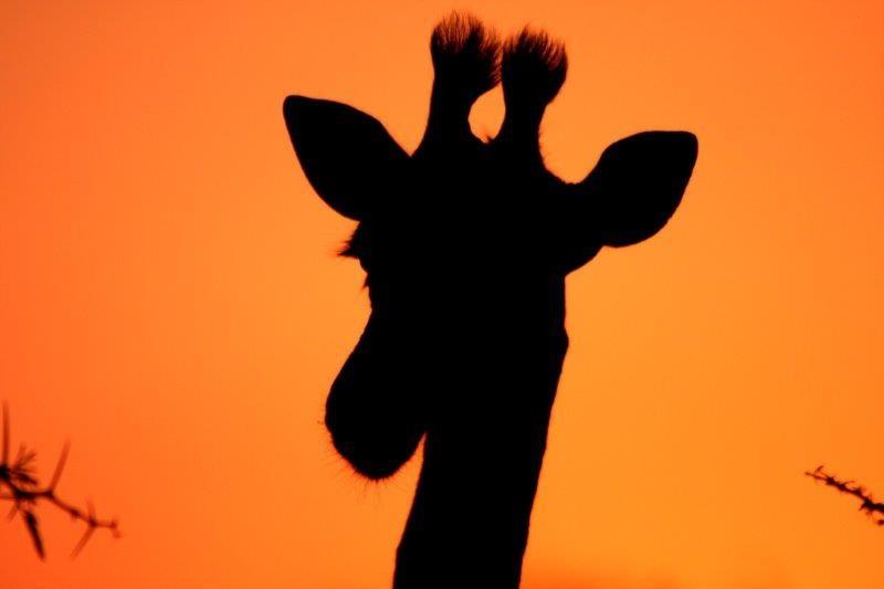 Giraffe-16-08-14-3-1