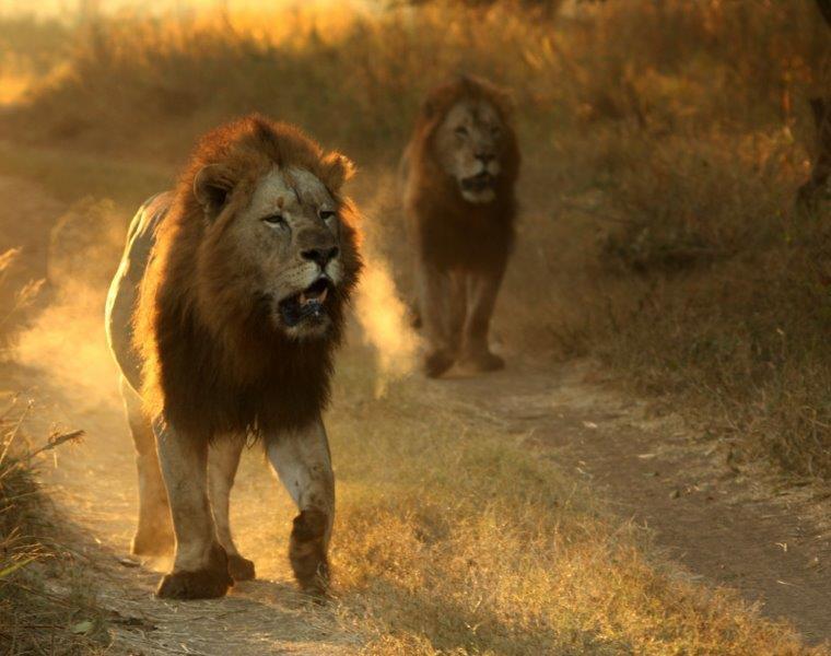 Lions-16-08-14-24-1