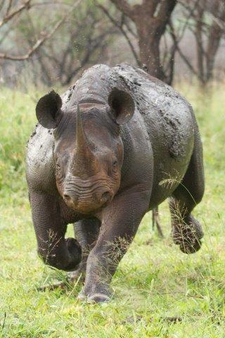 Rhino-16-08-14-5-1