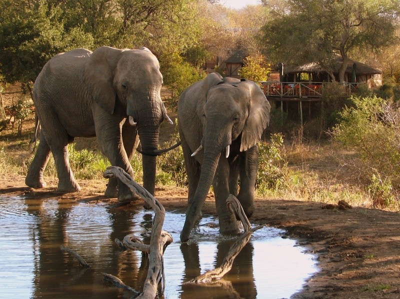 Elephants-Umlani-Bushcamp-Timbavati-Private-Nature-Reserve-Kruger-National-Park-by-Lisa-Scriven
