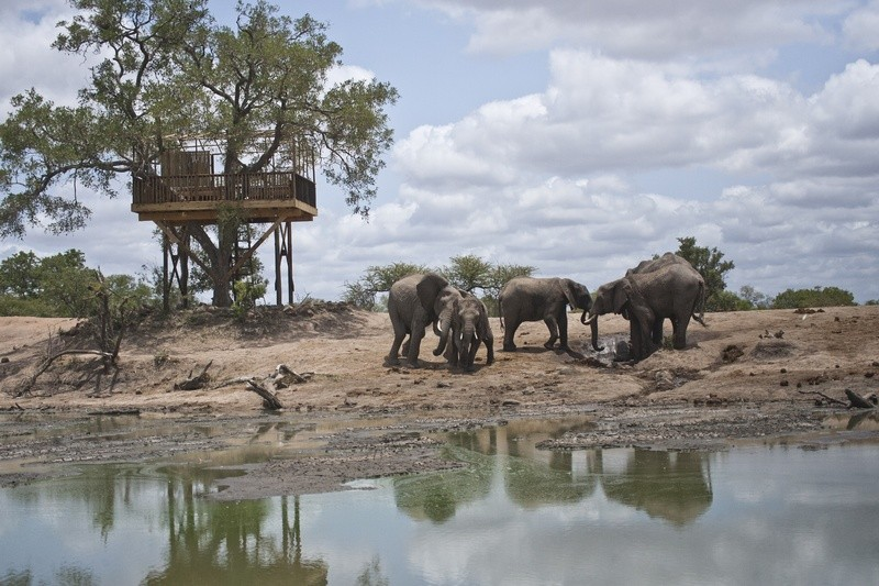 Game-viewing-Umlani-Bushcamp-Timbavati-elephants-Kruger-National-Park