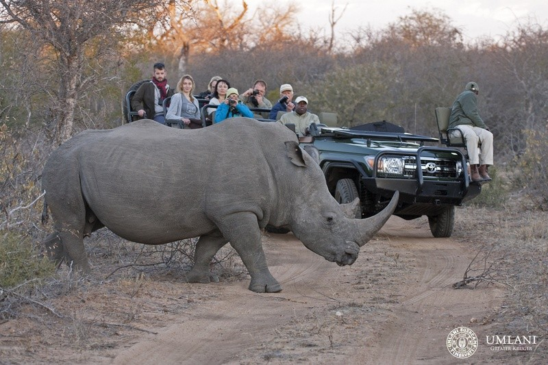 Game-viewing-rhino-Umlani-Bushcamp-Timbavati-Private-Nature-Reserve-Kruger-National-Park