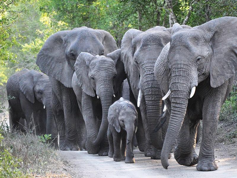 Thula-elephant-Volunteers-Academy-thula-thula