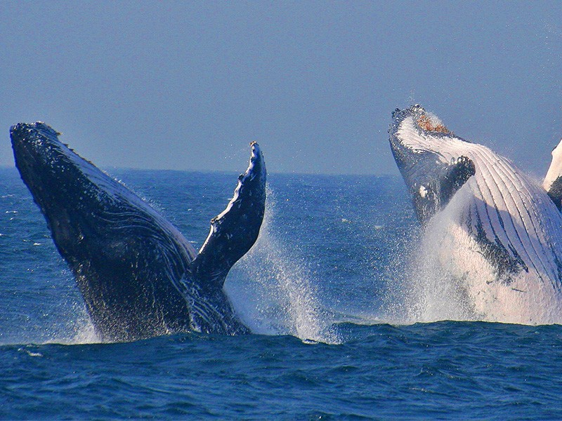 attractions-thula-thula-whales