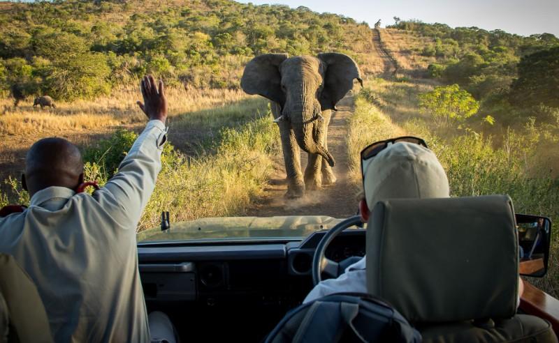 thula-thula-Elephant-Stop-1