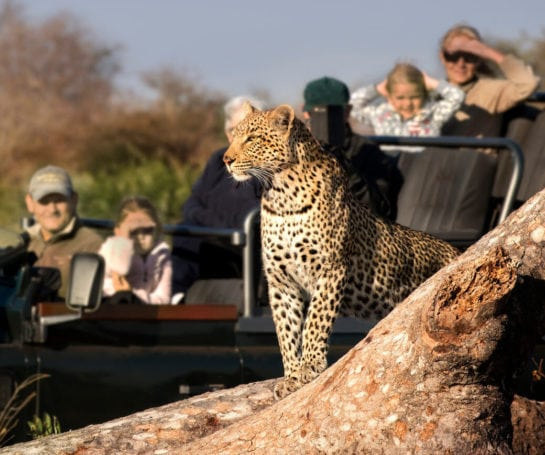 RockFig-Safari-Lodge_Game-Drive-with-Leopard3_Out-on-safari_banner