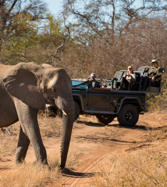 RockFig-Safari-Lodge_Game-Drive-with-elephant