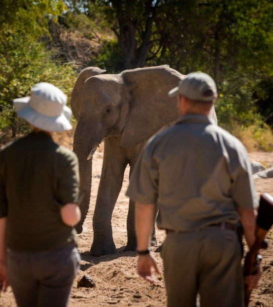 RockFig-Safari-Lodge_Walking-with-elephant2-545x612