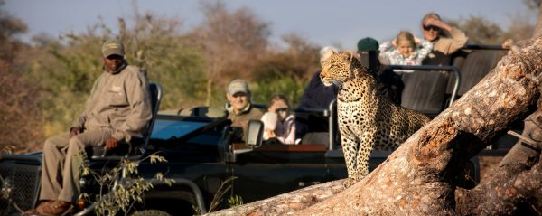 RockFig-Safari-Lodge_Game-Drive-with-Leopard_Out-on-safari_Timbavati