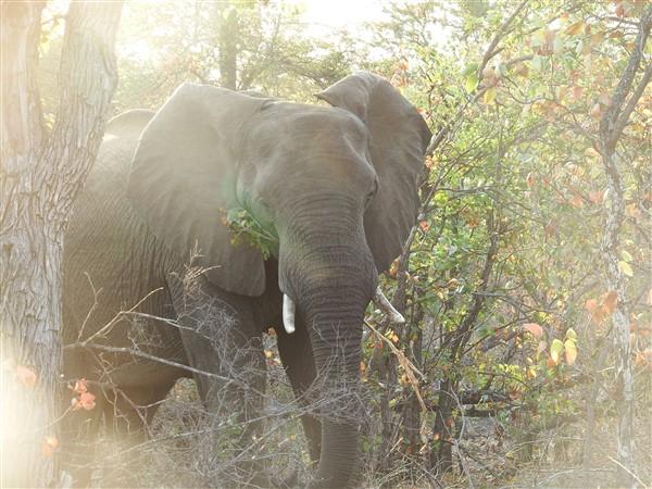 Autum-elephant-1