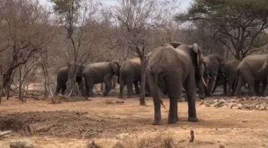elephants-infront-of-lodge-video-clip-10-aug-19