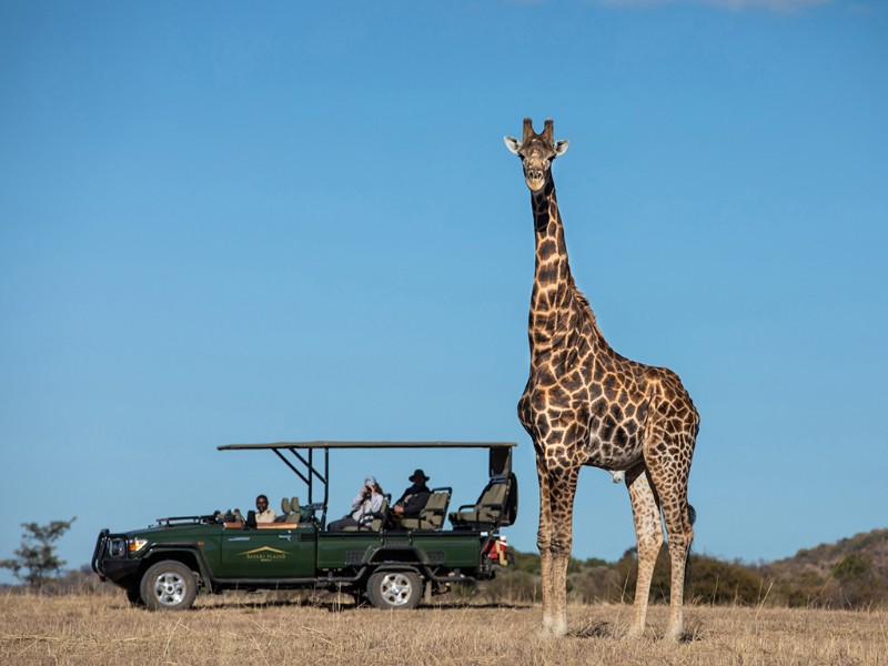 safari-plains-mabula-giraffe-game-viewer