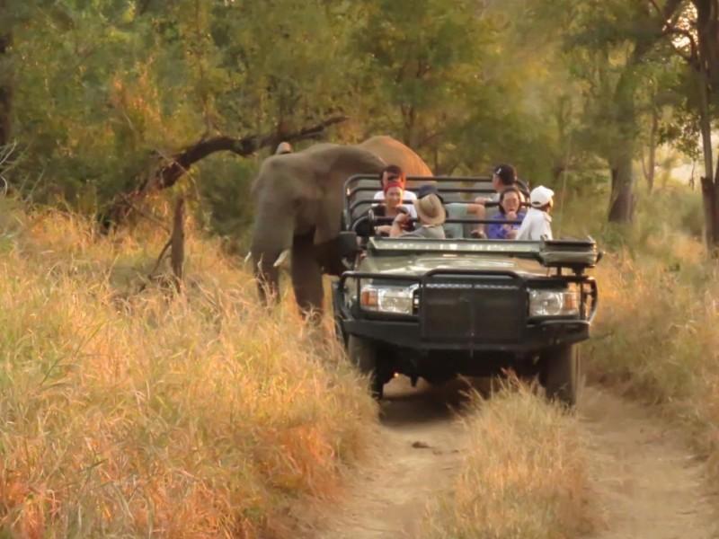 elephants_on_land_cruiser-Large-Medium-1