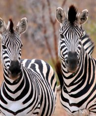 Safari Destinations exclusive discounted offers